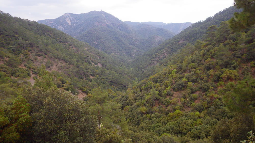 Paphos Forest