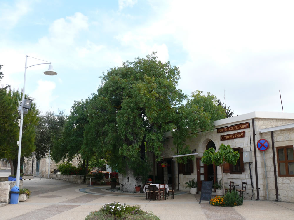 An ancient plane tree in a Cyprus village square